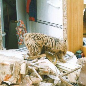 Perros Método Arcón interviniendo en España tras explosión de gas