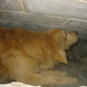 Perro Método Arcón señalizando persona viva sepultada